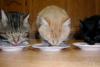 eiress: Kitties need I say more (pic#1000502)