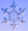 beccaelizabeth: a real snowflake (snowflake)
