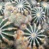 anotherworld: Cactus (Cactus)