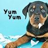 craterdweller: (STOCK: dog yum yum)