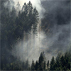 adonnen_estenniel: (trees in mist)