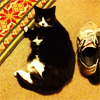 pensnest: black and white cat with sneaker (Socks and shoes)