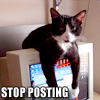 pensnest: tuxedo cat draped over computer monitor (Cat stop posting)