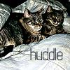 seagull2eagle: (cats - huddle)