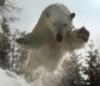 latheos: (polar bear) (Default)