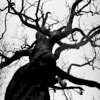 wonderfulchaos: (dark tree)