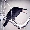 dragonyphoenix: (raven)