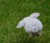 anoushe: (птица гордая)