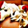 venetia_sassy: (Images // puppies! With Santa hats!)