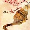 dreamingofcats: (Default)