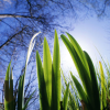 etben: flowers and sky (spring sprang sprung)