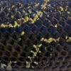 desertroot: Closeup of the scales of a black snake (Dragon)