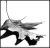 eurydicebound: (oak leaf)