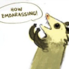 "newredshoes: possum, ""How embarrassing!"" (<3 