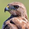 skyboundmisfit: (Eye of the hawk)