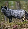 bravofiftyone: (Silver fox)