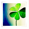 muccamukk: Single shamrock inside a white border. (Christian: Shamrock = Trinity)