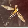 muccamukk: Jan flying joyously. (Marvel: Flying)