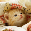 outerspace: (stock; baby kitty in a blanket)