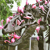 sohotrightnow: A T. Rex skeleton, covered with plastic pink flamingos. ([etc] send help)