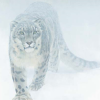 snow_kitty: (Snow kitty)