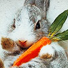 lou: bunny with a carrot! (bunny)