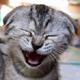 fischdottir: (cat)