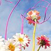 navaan: (springflowers)