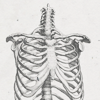 salticidae: greyscale rendering of a human ribcage (Default)
