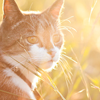 icecream_kitty: a cat in a sun drenched field, looking alert. (kitty)