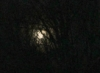 bloomingpol: (moon)