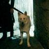 starkbastard: (Ghost guard)