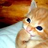 furiosity: (happy kitteh has a happy)