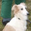 knight_light: [dog] (What is that)