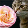 cats4everyone: (flower catte)