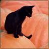 cats4everyone: (pumpkin catte)