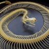 snakebones: (cool)