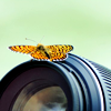 moyashiii: Butterfly perched on a camera lens. (flutter by)