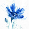 dragonyphoenix: (blue flower)