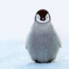 jenna_thorn: adorable baby penguin (cute penguin)