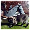shatkaya: (Jeans)