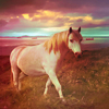 "notsomanic: by <lj user=""fromthewind""> (sparklehorse)"