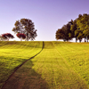 phineasfrogg: a photo of a grassy field, with trees in the background (fields)