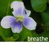 twistedchick: violet, my photo (breathe white violet)