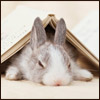 likebunnies: (Bunny Book)