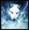 ladysilverwolf: (pic#10272295)