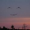 casey270: (smile)