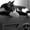 gowilde: (Maxcat)