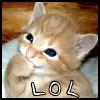 mokka_kahvi: (Kitten; lol)