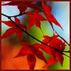mokka_kahvi: (Autumn Leaves)